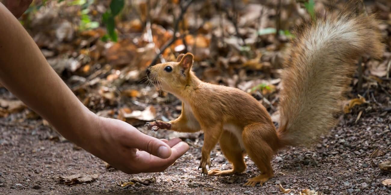 Kundenvertrauen gewinnen Eichhörnchen